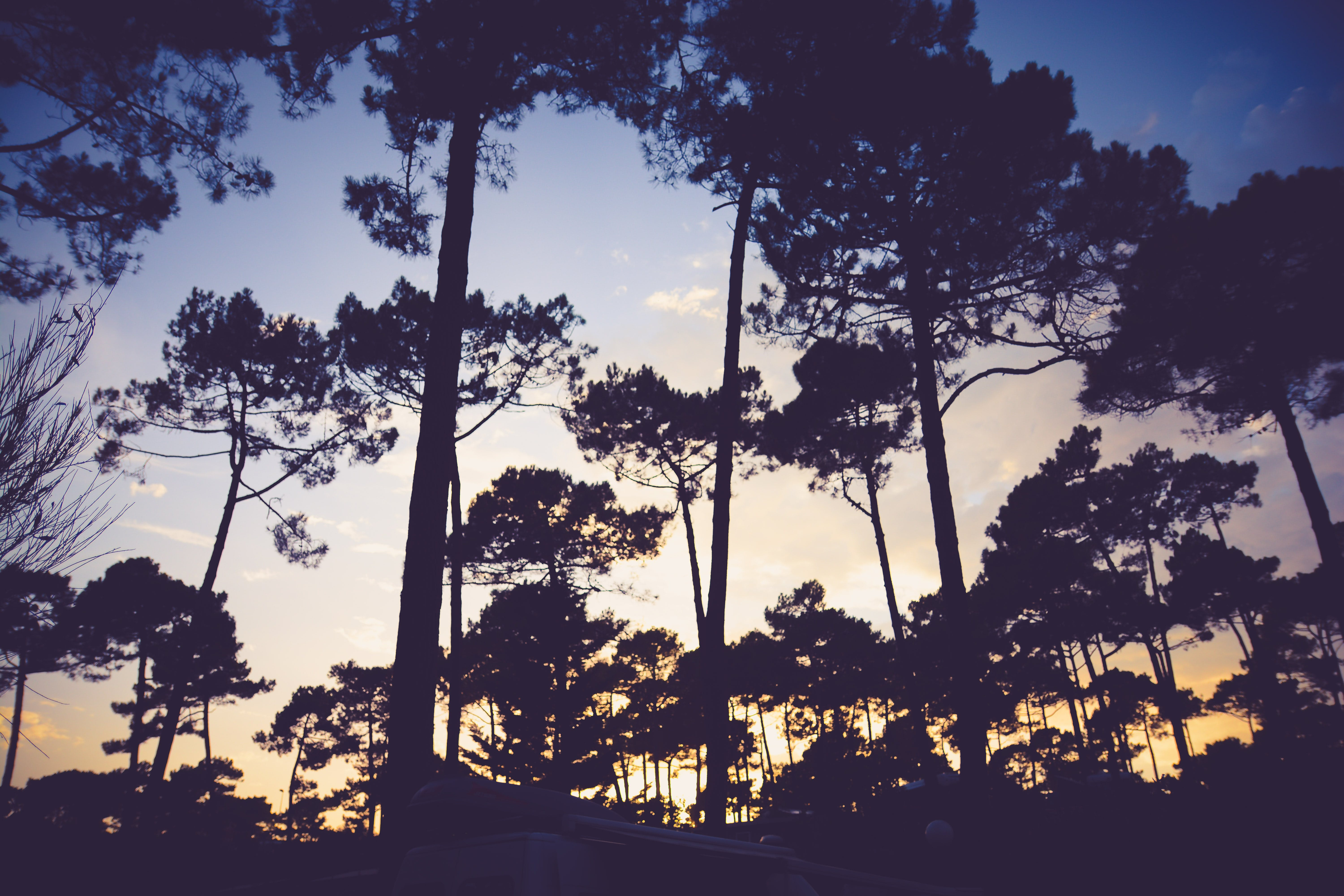 Free stock photo of wood, sunset, forest, tree