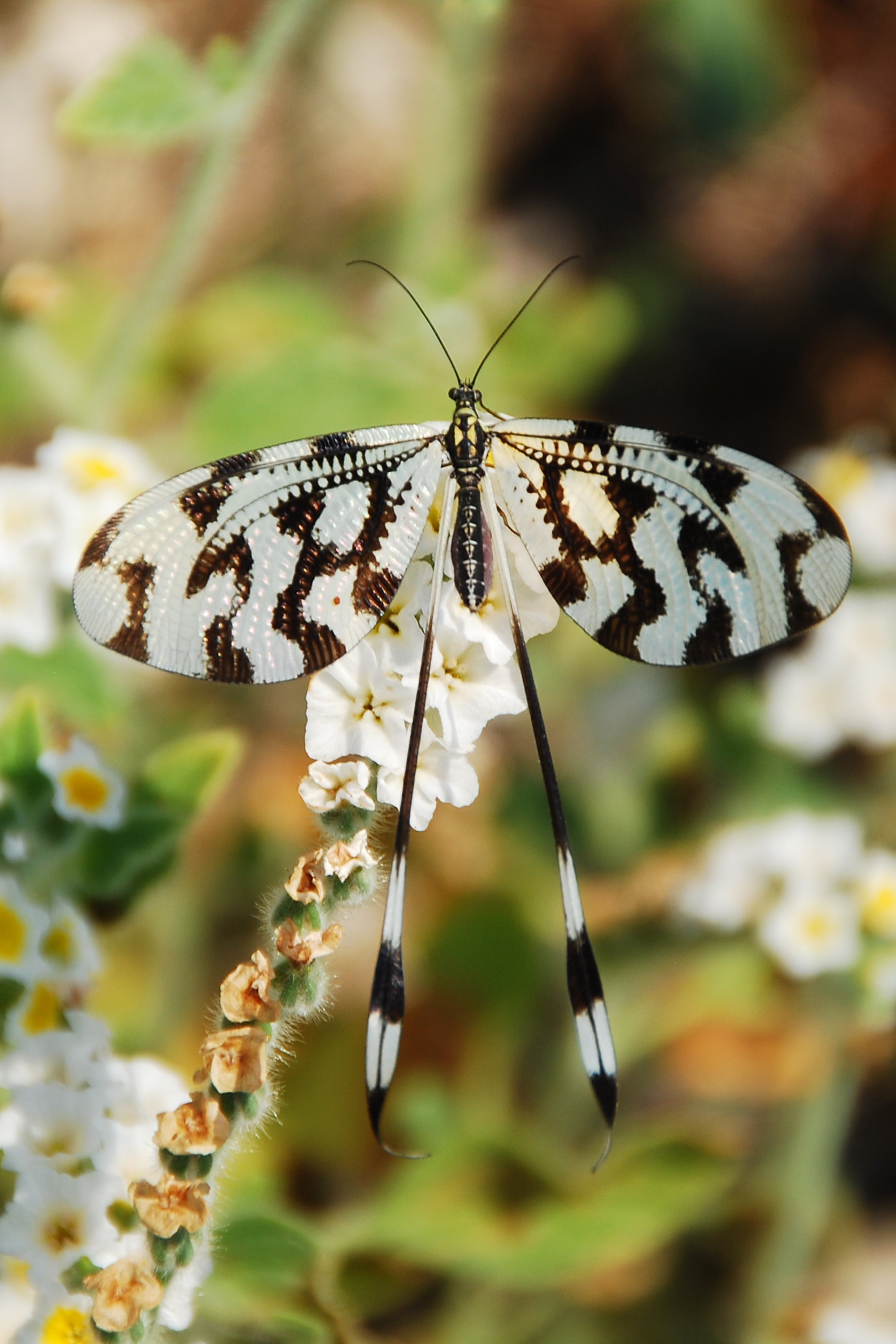 White and Black Butterfly Perched on White Flowers in Bloom Selective Focus Photo