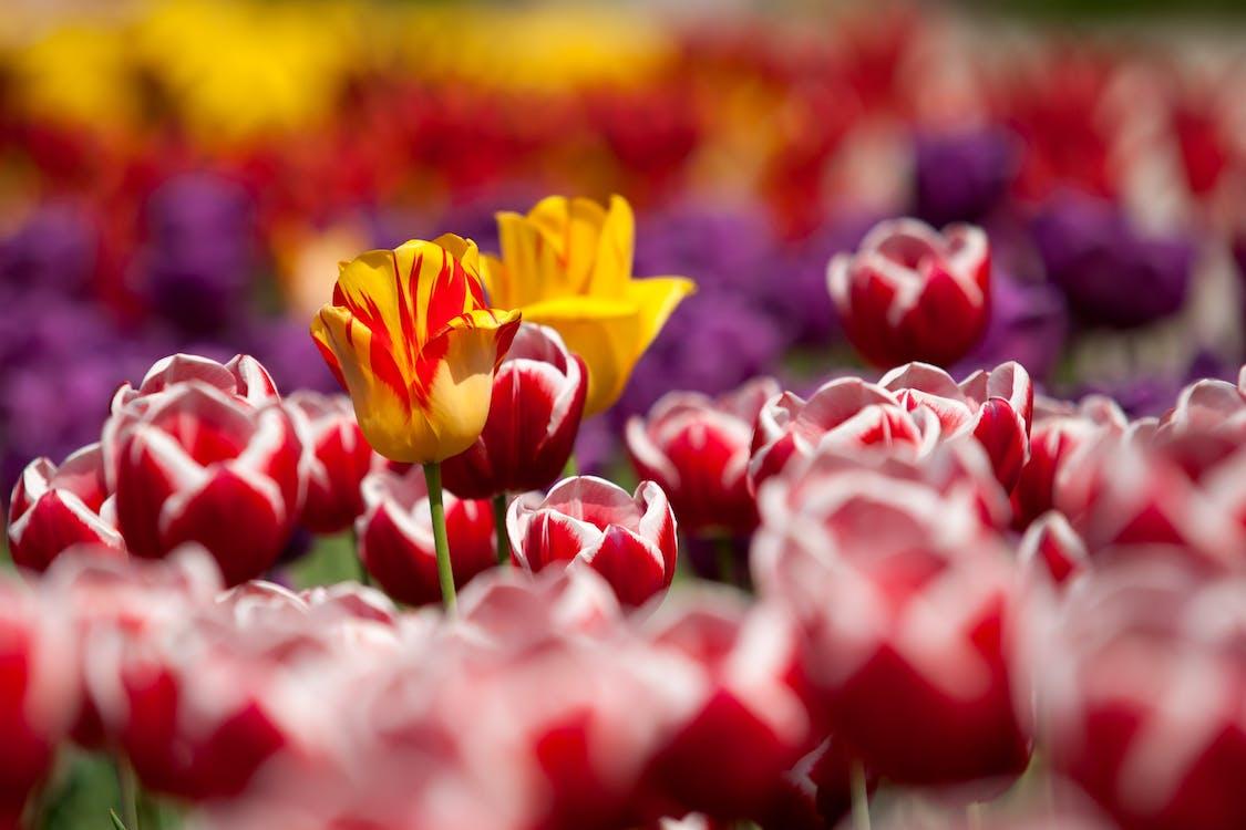 centrale, floare, floră