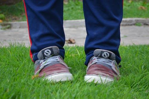 Foto d'estoc gratuïta de corredor, herba, peus