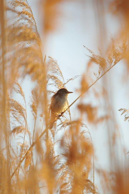 Δωρεάν στοκ φωτογραφιών με άγρια φύση, αυγή, δύση του ηλίου