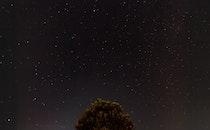 sky, night, tree
