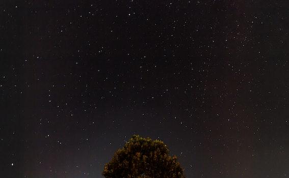 Free stock photo of sky, night, tree, stars