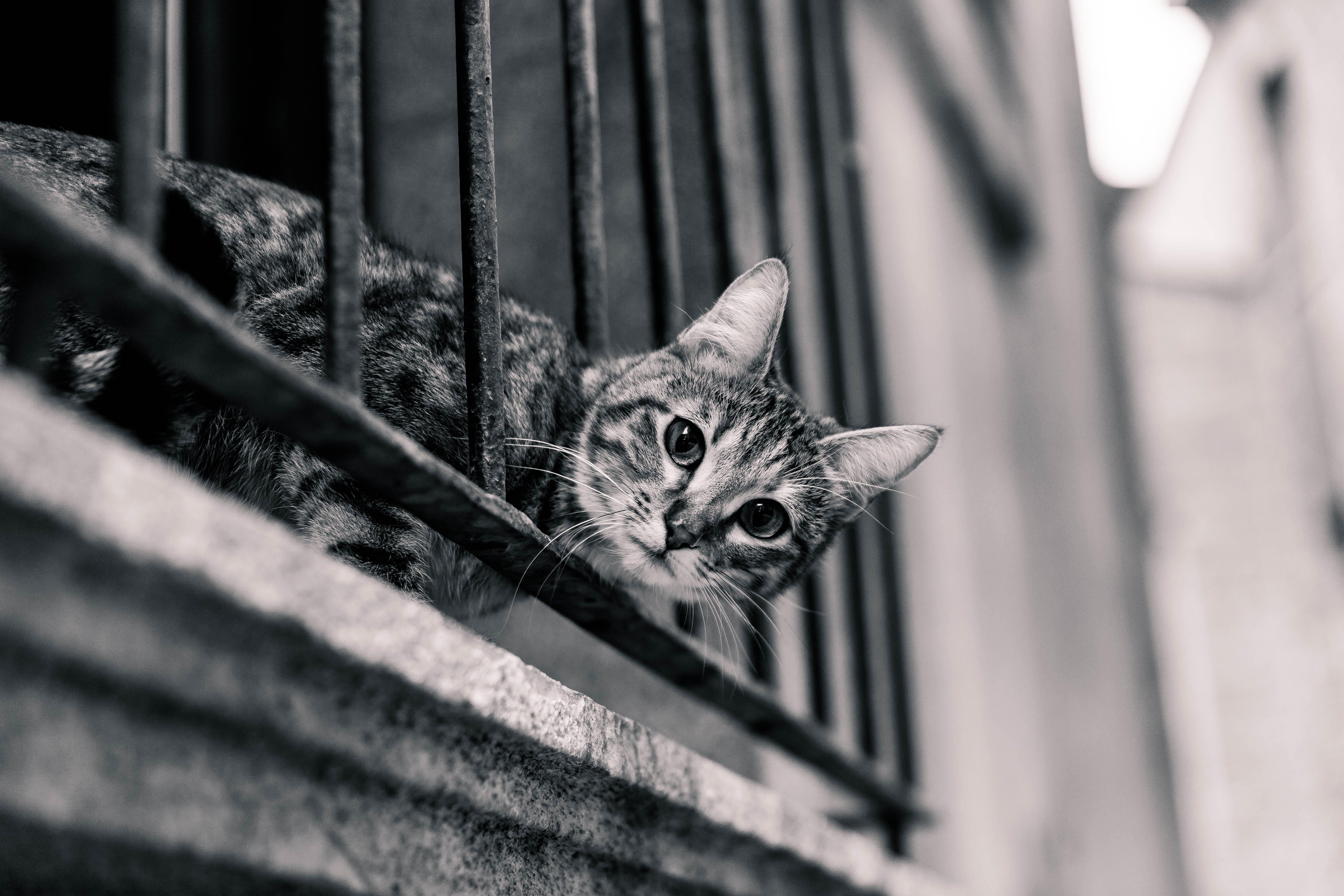 adorable, animal, black-and-white