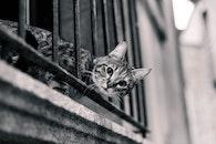 black-and-white, animal, pet