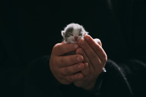 Free stock photo of adult, animal, baby