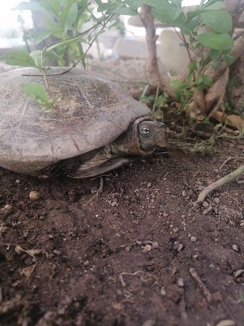Photos gratuites de aldabra, animal, animal de compagnie