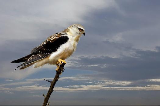 Selective Focus of Bald Eagle