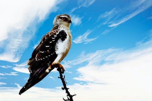 Foto stok gratis awan, bertengger, bidikan sudut sempit, binatang