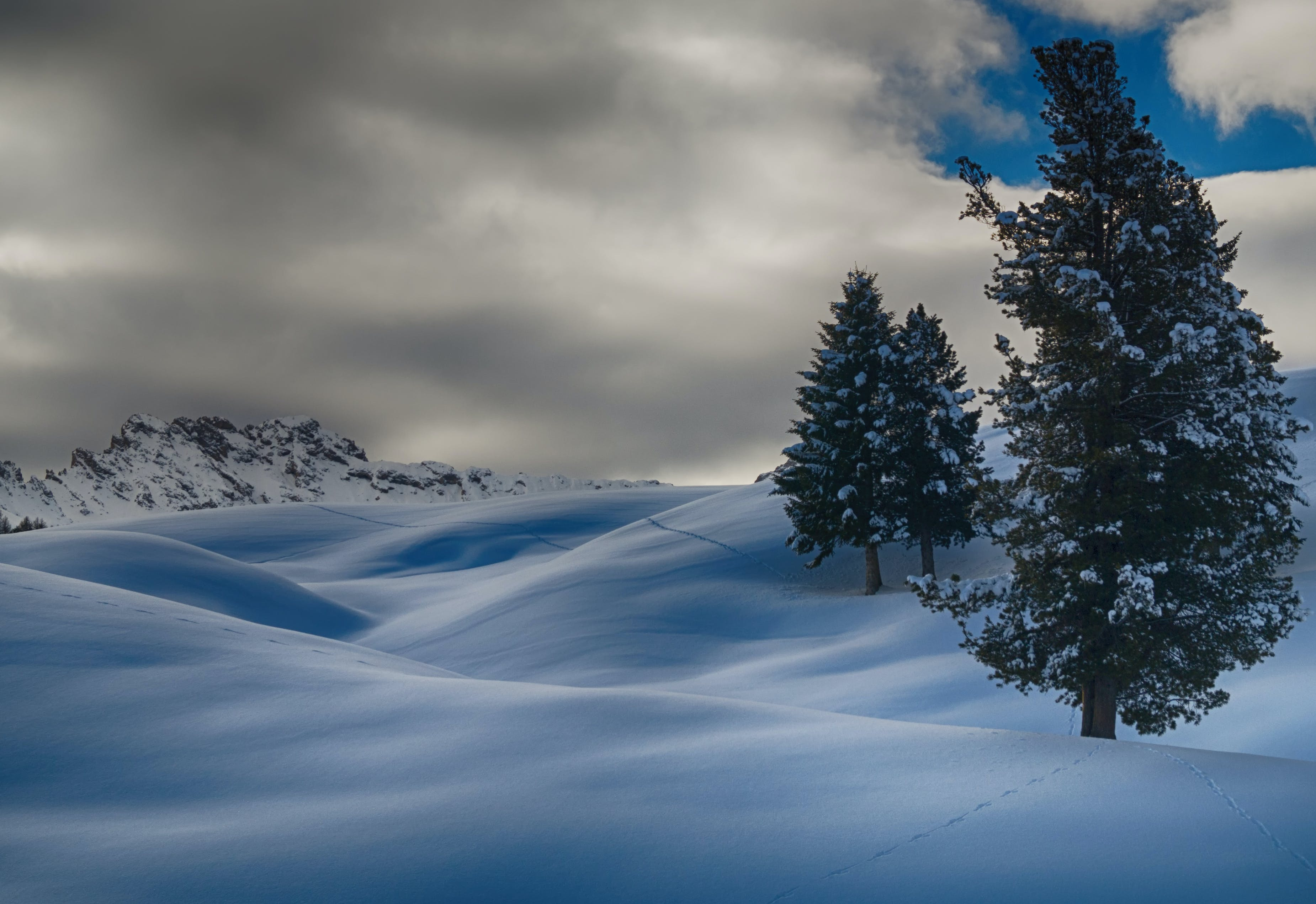 Time Lapse Photography of Three Trees Covered With Snow