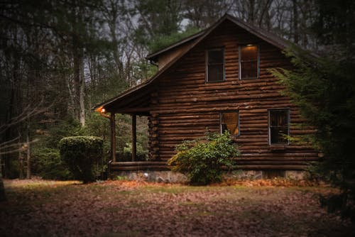 Brown Cabin in the Woods on Daytime