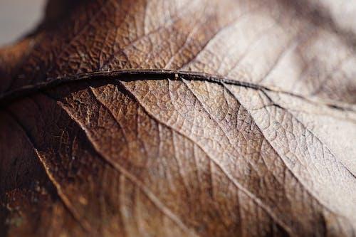 Gratis arkivbilde med blad, brun, farger, miljø
