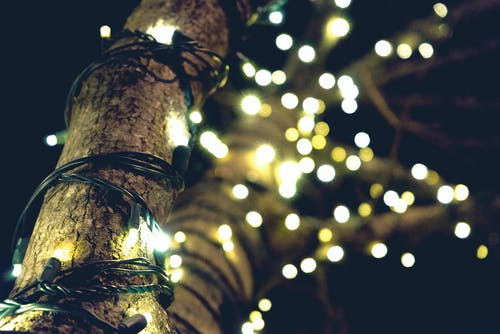 Yellow String Lights on Brown Tree