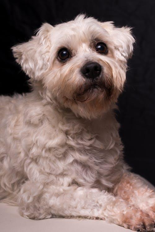 개, 개 초상화, 귀여운, 귀여운 동물의 무료 스톡 사진