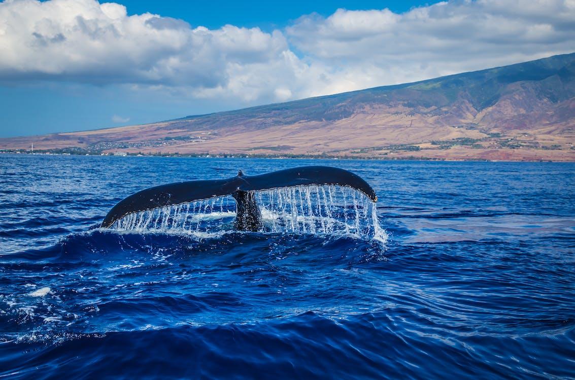 Avistamiento de Ballenas Hermanus, Sudafrica