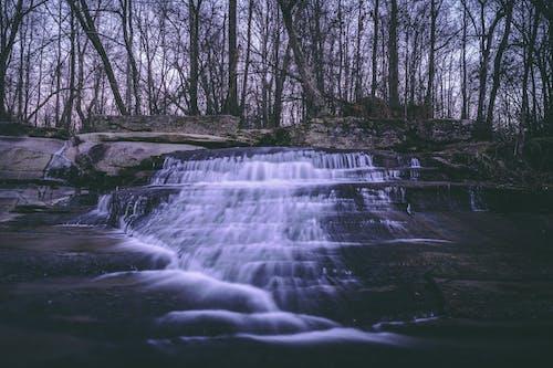 Foto stok gratis air, air terjun, alam, hutan