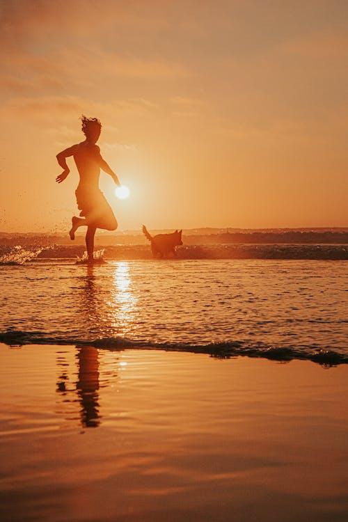Free stock photo of beach, beach sunset, dog