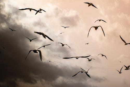 Flock of Birds Flying Under Cloudy Sky