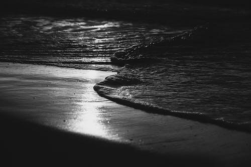 Kostenloses Stock Foto zu atlantischer ozean, leben im ozean, meerwasser