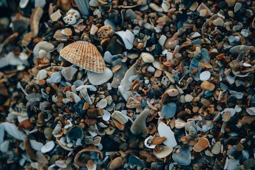 Kostenloses Stock Foto zu abstrakt, am strand, atlantischer ozean