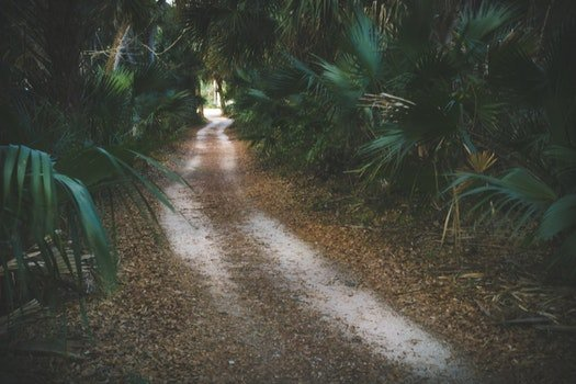 Pathway Surrounded by Green Palm Plants at Daytime