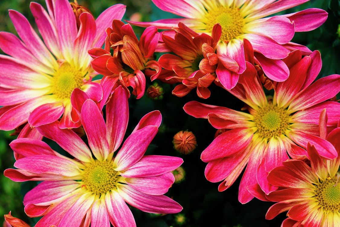 Pink and Yellow Flowers in Macro Lens Photography