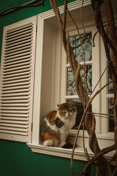 A Cat Sitting on a Window Sill