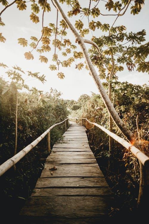 Ingyenes stockfotó dzsungel, emberek, fa témában