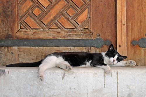 Fotos de stock gratuitas de acostado, adorable, cansado
