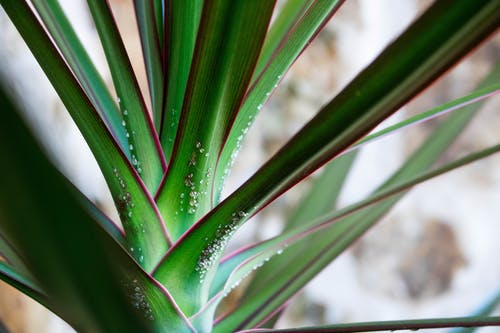 Close-up Photo of Green Leaf Plant