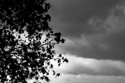 Grayscale Photo of a Tree Under Cloudy Sky