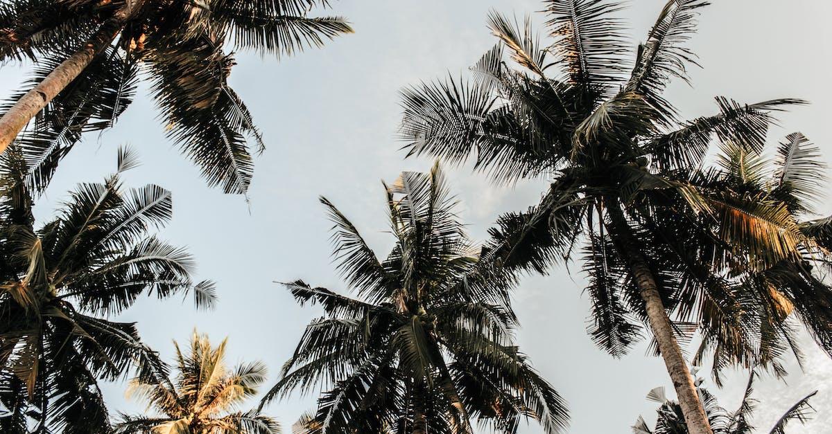 объявления пальма вид сверху картинка видим, что последнее