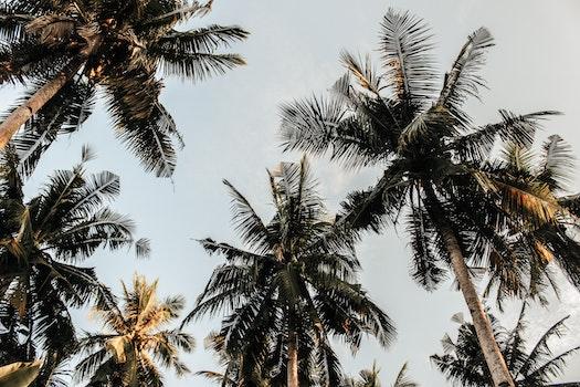 Kostenloses Stock Foto zu natur, baum, insel, palme