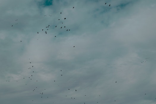 Flock Of Birds Flying Under Cloudy Sky