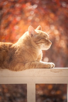 Tabby Cat On White Wooden Fence