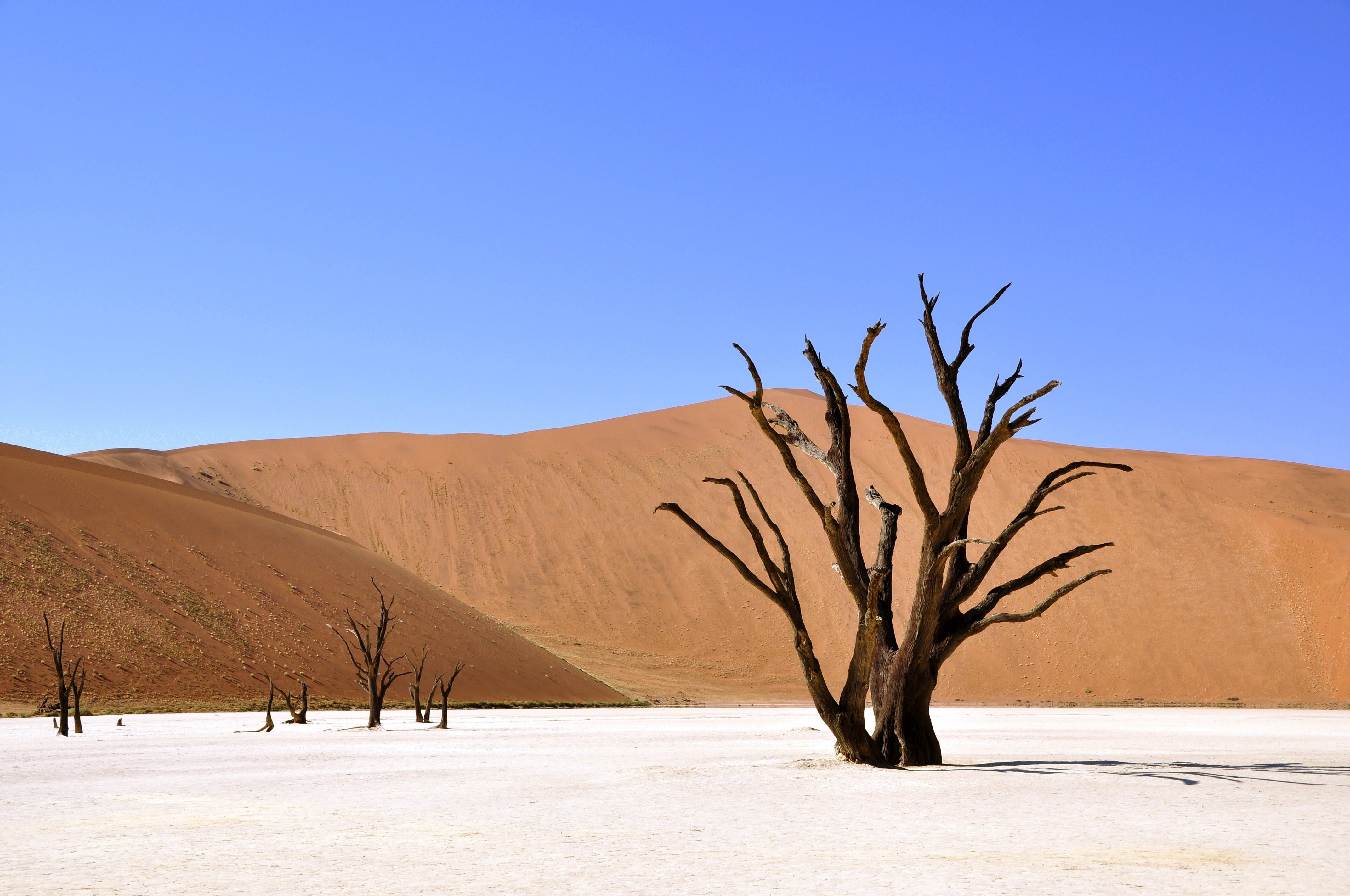 Wittered Tree on a Dessert