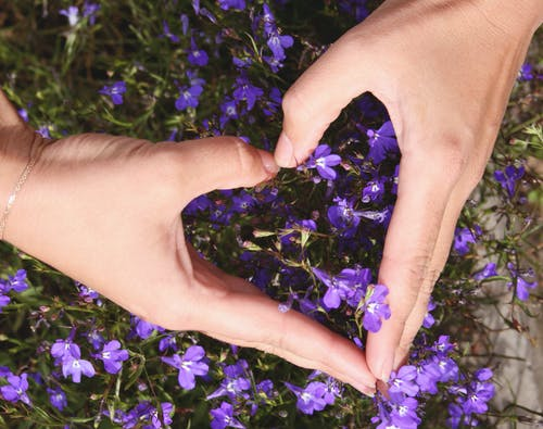 Imagine de stoc gratuită din dragoste, floare, floră, flori