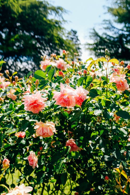 Fotobanka sbezplatnými fotkami na tému exteriéry, farba, flóra