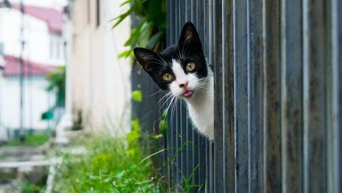 Fotos de stock gratuitas de al aire libre, animales monos, cara de gato, gato