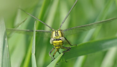 Green and Black Dragon Fly on the Grass Photography