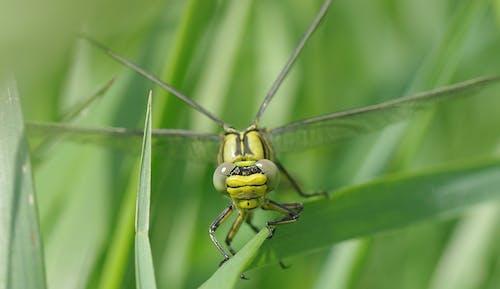 Бесплатное стоковое фото с зеленый, максросъемка, насекомое, снимок крупным планом