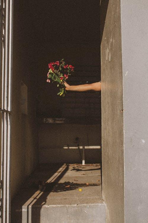 Gratis lagerfoto af arkitektur, arm, blomster