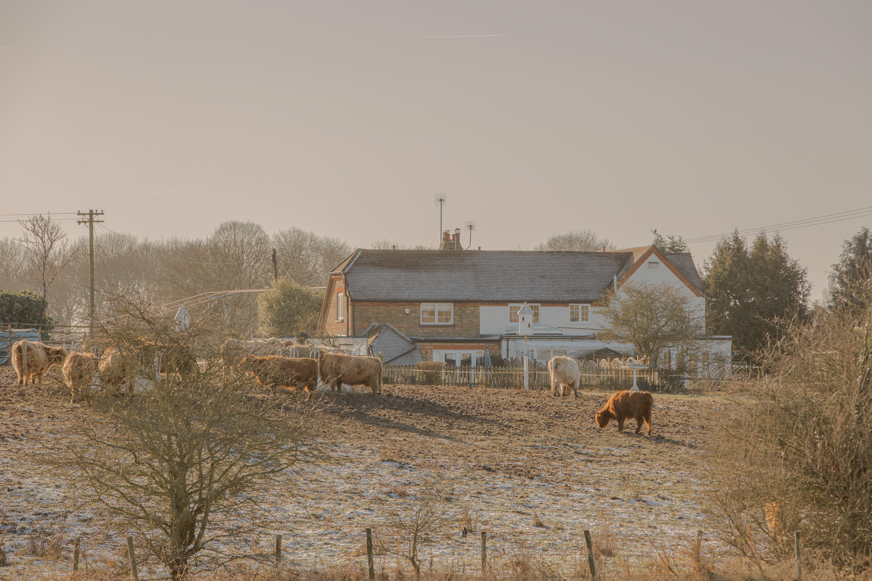 Základová fotografie zdarma na téma farma, hospodářská zvířata, kráva, plot