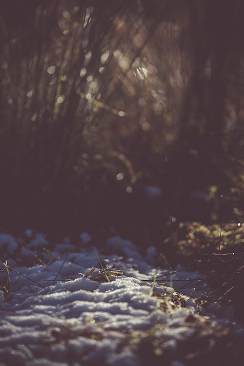 Photos gratuites de environnement, froid, gel, herbe