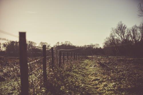 Foto d'estoc gratuïta de alba, arbres, boira, herba