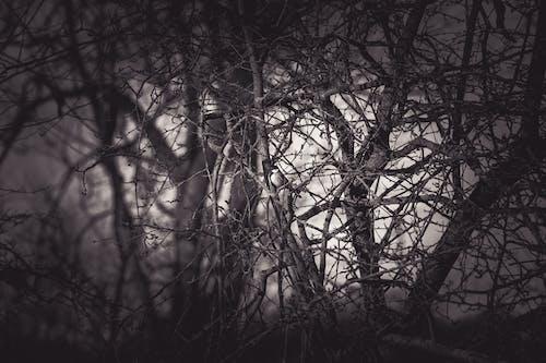 Gratis stockfoto met boom, takken, zwart en wit