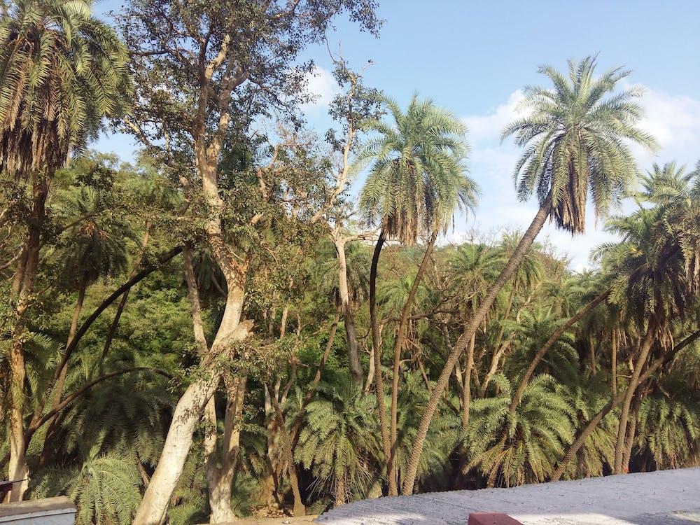 Foto d'estoc gratuïta de arbre, bosc, coco