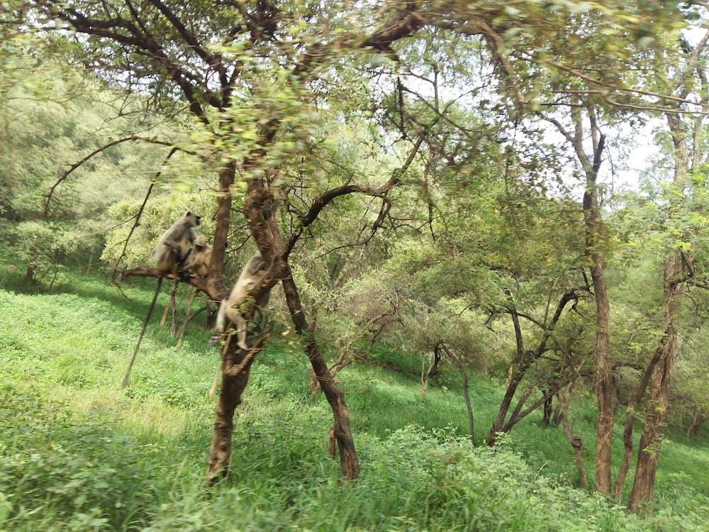 Fotos de stock gratuitas de bosque, fauna salvaje, mono