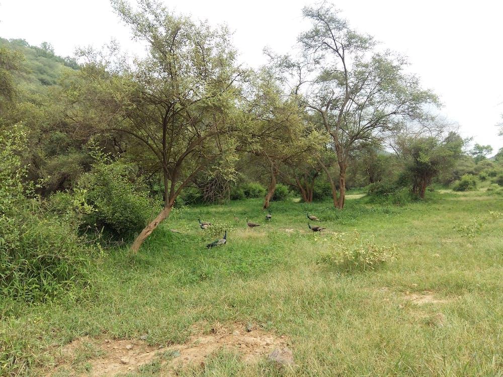 Imagine de stoc gratuită din arbore, codru, copac