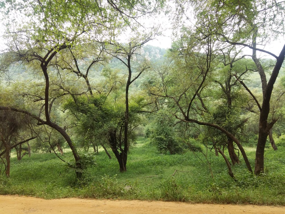 Free stock photo of dark green, green, tree